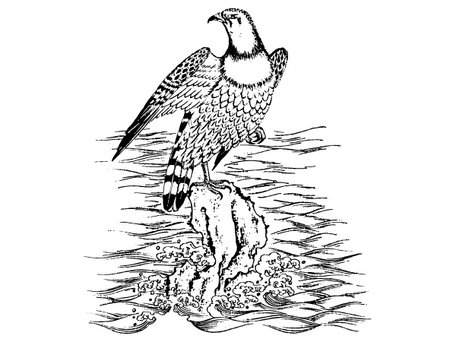 Material of the six Chinese classical vector Hawks