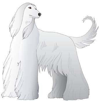 Beautiful Dog Vector 7