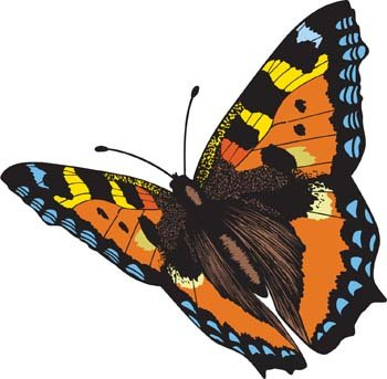 Butterfly Vector 4