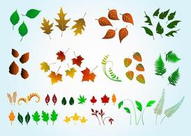 Vector Leaves Graphics