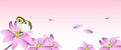 Pink flowers and butterfly