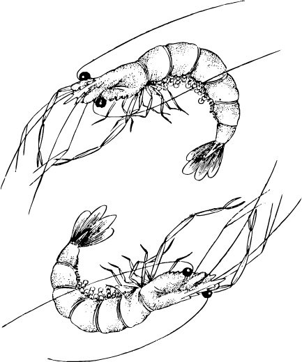 A pair of lobster