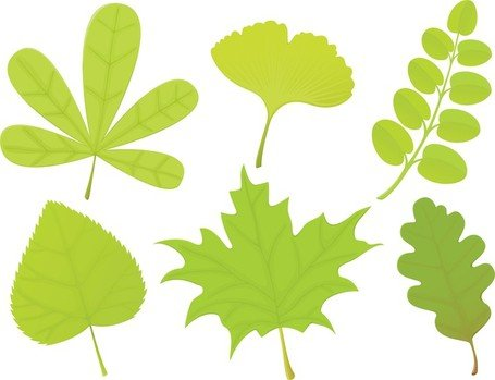 A Variety Of Leaf Forms 04
