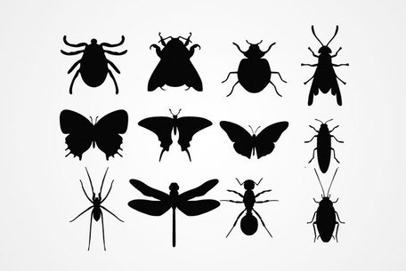 Silhouettes insectes