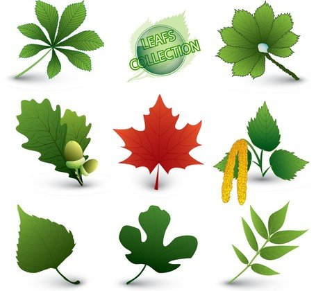 A Variety Of Leaf Forms 05