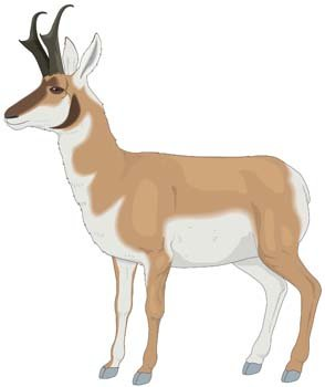 Antilope Vector 1