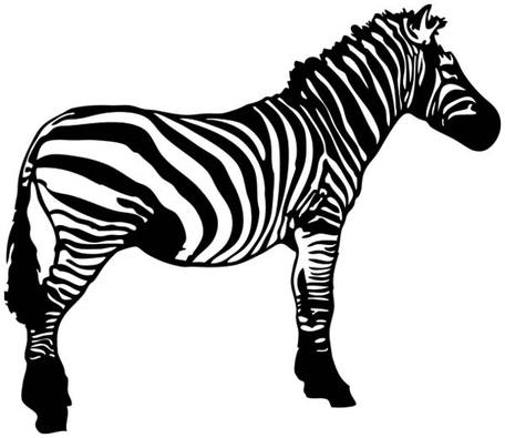 Zebra Free Vector Resource