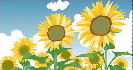 Sunflower summer blue sky and white clouds