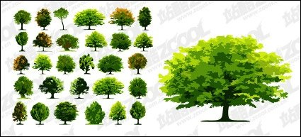 A number of trees