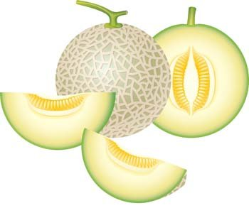 free melon clipart and vector graphics clipart me rh clipart me lemon clipart png lemon clipart