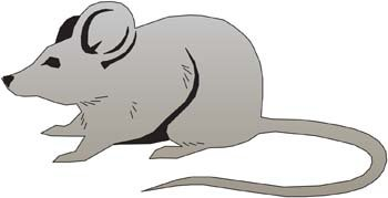 Mouse Vector 13