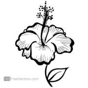 Hand Drawn Hibiscus Flower