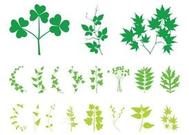 Plant Leaves And Branches