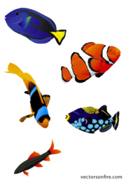 Colorful Aquarium Fish (5 Fish)