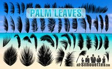 46 Palm Leaves