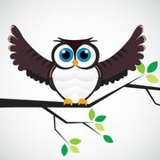 Vector Owl on a branch