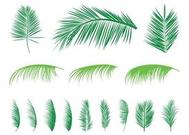 Palm Leaves Silhouettes Set