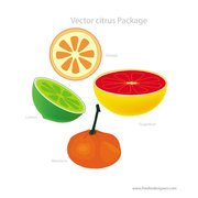 CITRUS FRUIT VECTOR DOWNLOAD.eps