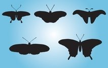 Black Butterfly Pack