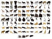 50 models of animals and silhouettes