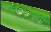 Vector of the water leaves the material