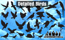 29 Detailed Vector Birds