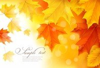 Beautiful Autumn Leaves Card 01