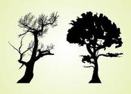 Old Trees