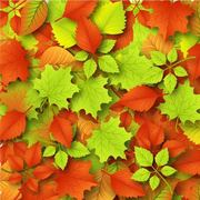 Fallen Autumn Leaves Background