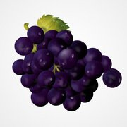 Purple Grapes Vector Graphics (Free)
