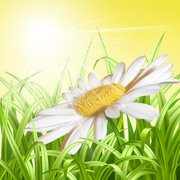 Detailed Daisy Floral Sunny Background