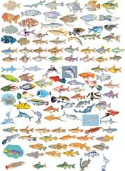 Big Vector Collection of Different Fish