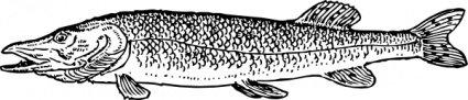 Pike Fish Animal